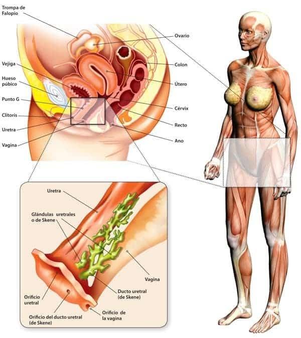 ano de próstata denso